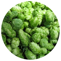 SKYe2 Farms Fresh Hops - Zeus